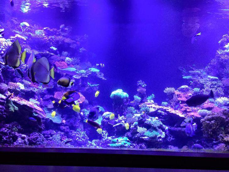 beaux coraux lumières de croissance