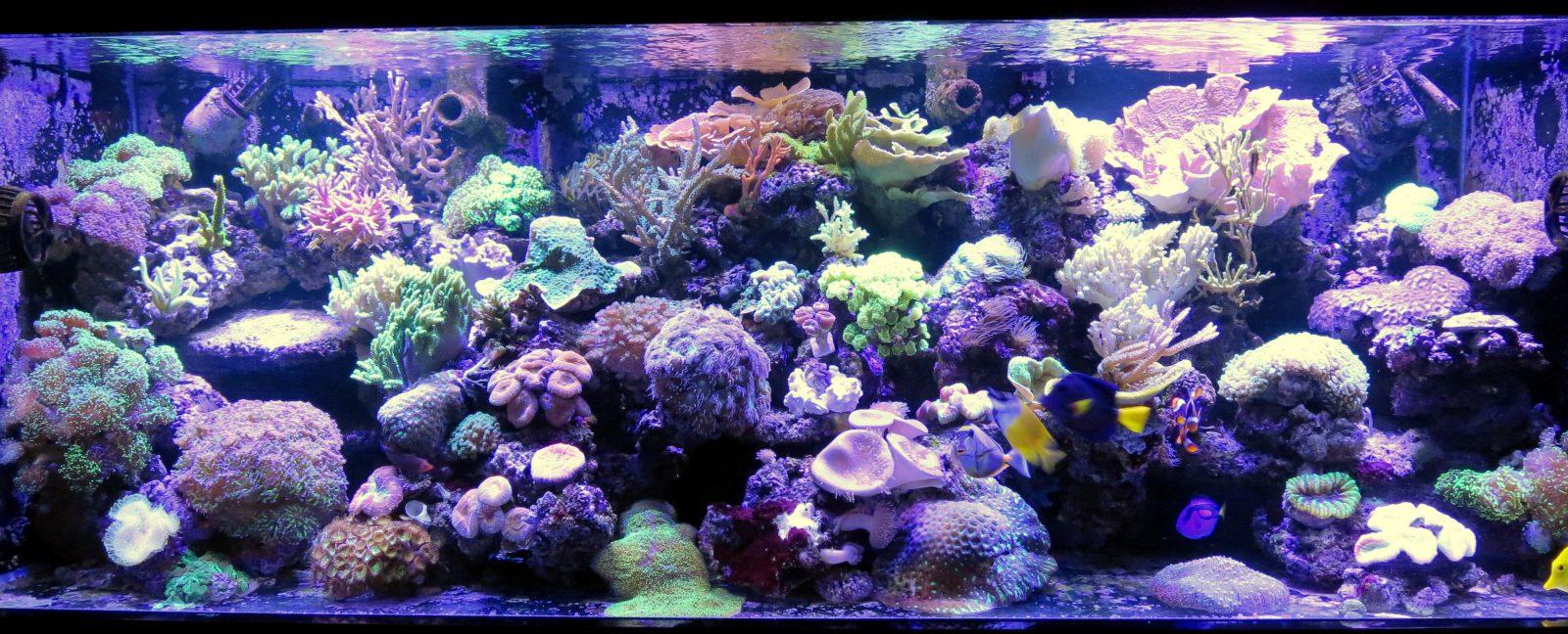 meilleur coraux de réservoir léger