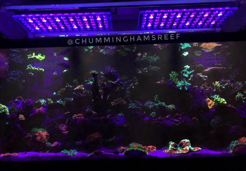 incrível iluminação do tanque de recife