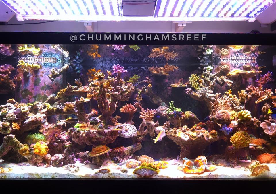 aquário de alta qualidade levou iluminação