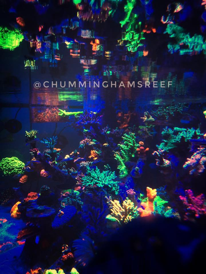 colorful reef corals LED lighting