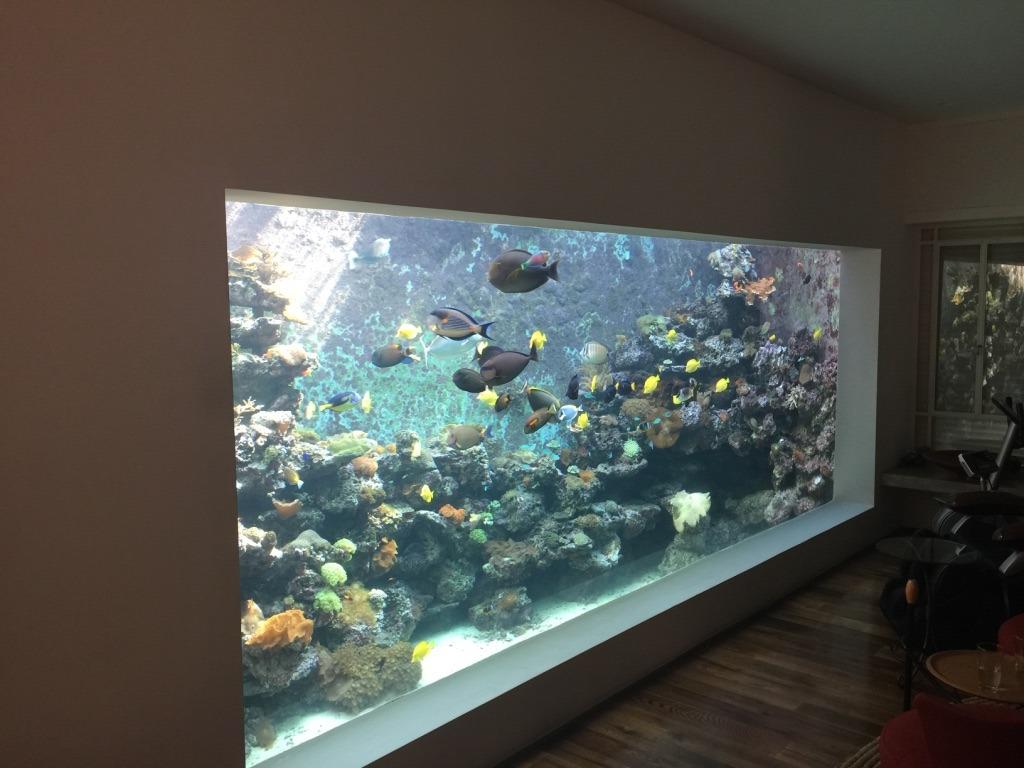 hồ cá công cộng chiếu sáng