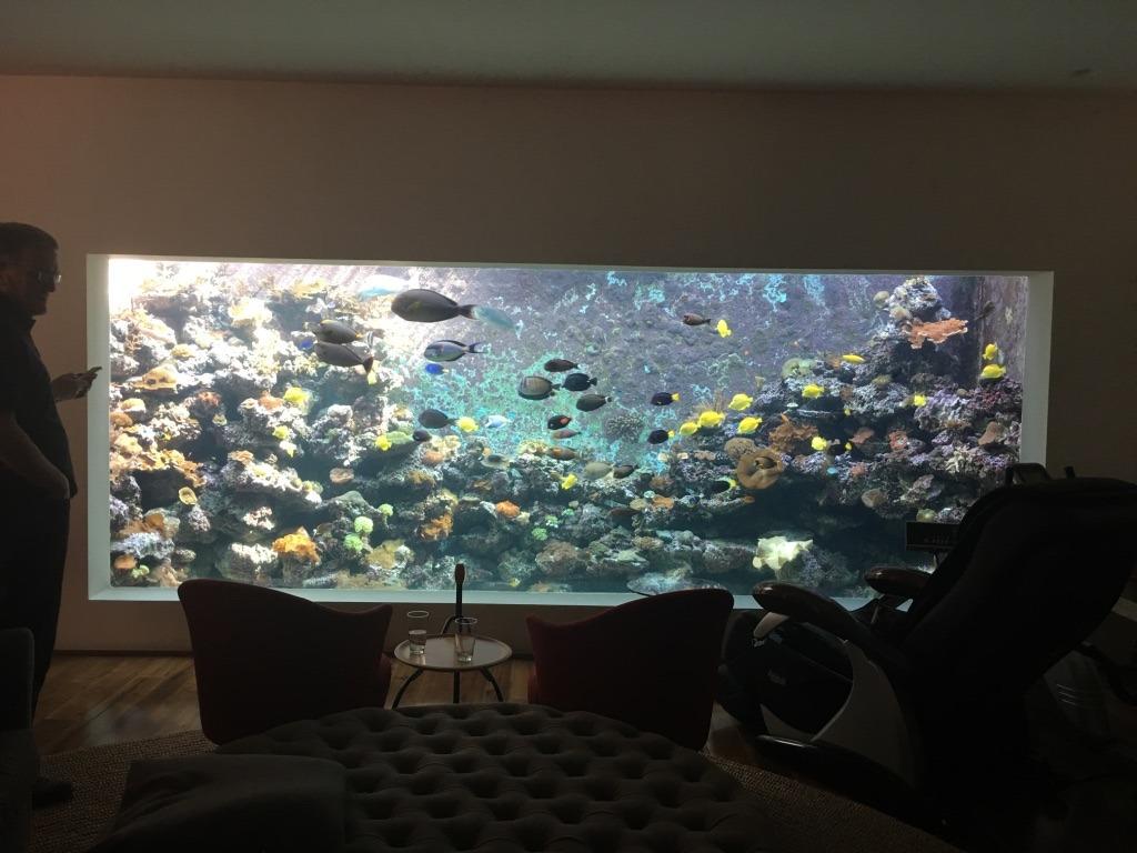 đèn bể vương quốc san hô