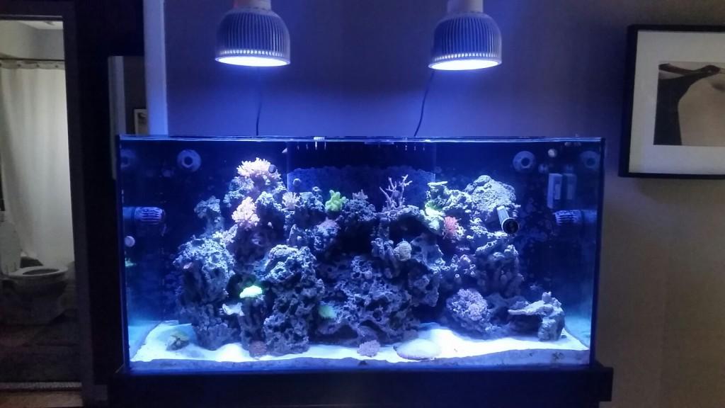 meilleures lumières LED pour coral pop