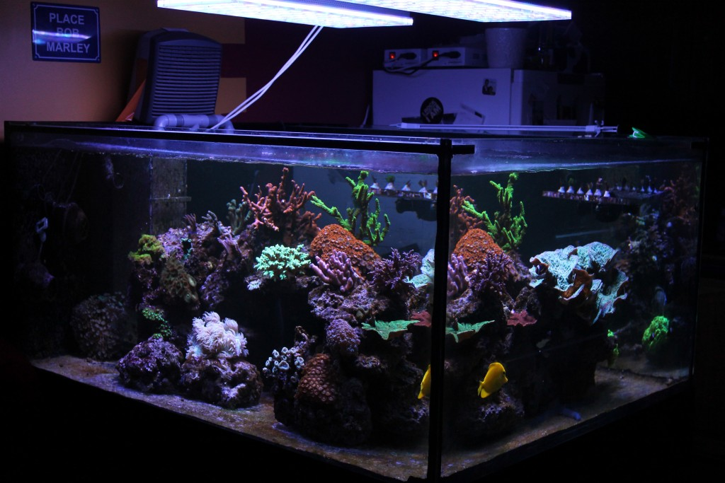 best leds for colorful corals