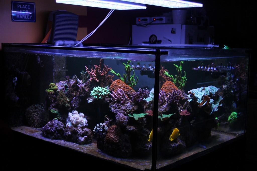 meilleures leds pour les coraux colorés