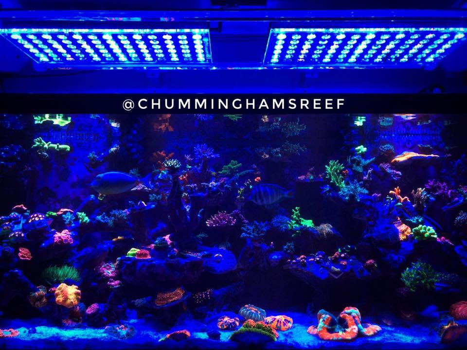 melhor iluminação de aquário de recife LED 2020