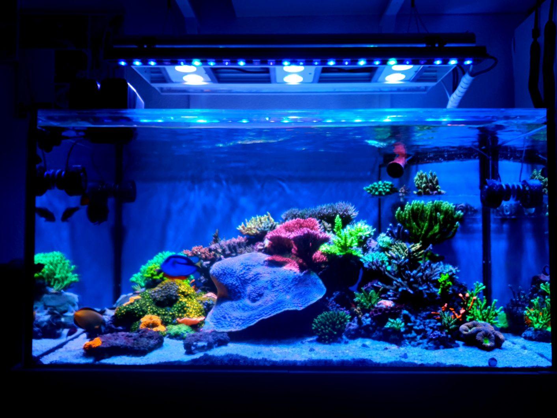 Beste-reef-led-aquarium-coral-pop