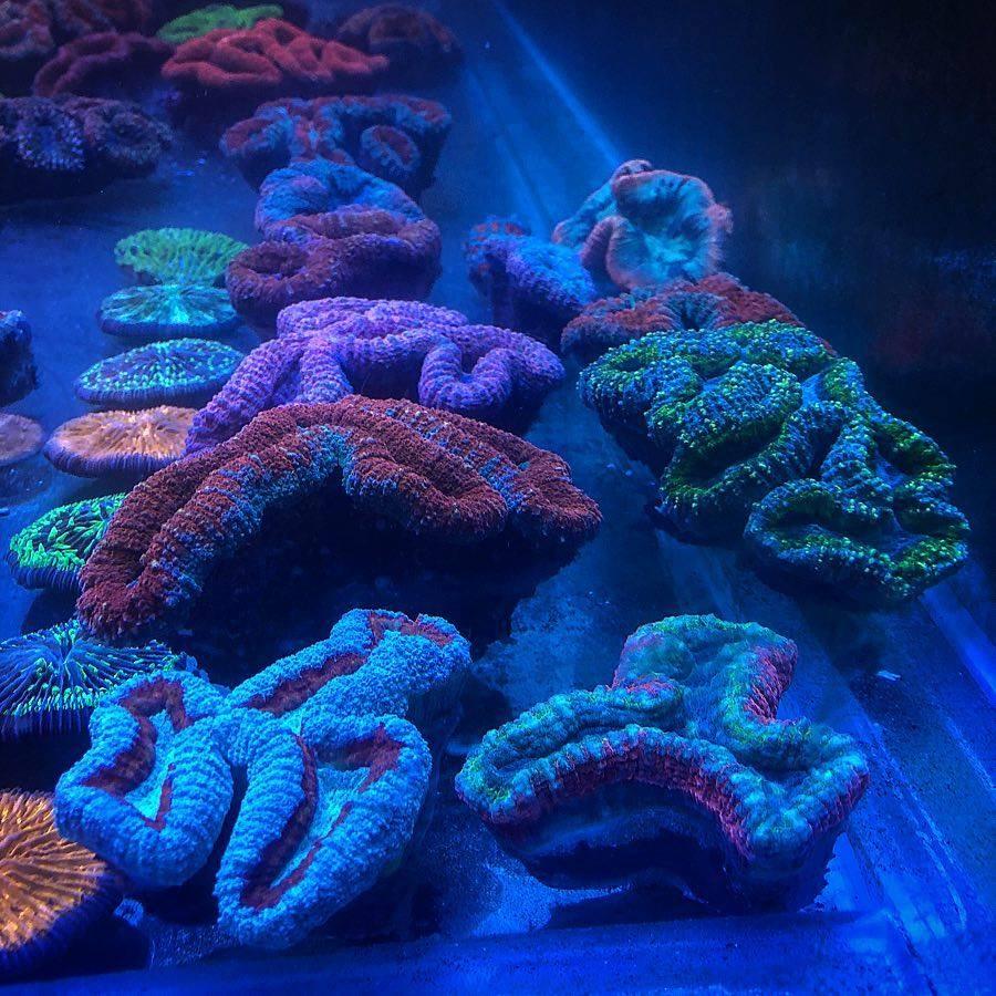 saltwater aquarium coral pop lighting