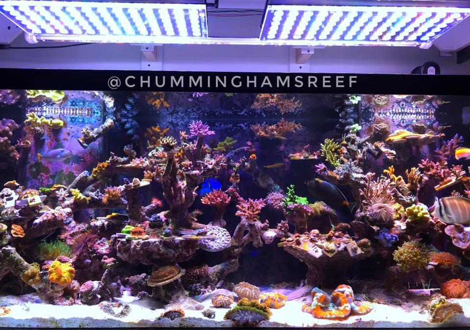 melhor luz do aquário atlantik v4