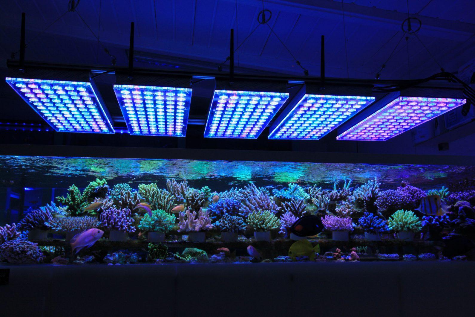 najlepsze oświetlenie led akwarium rafowego