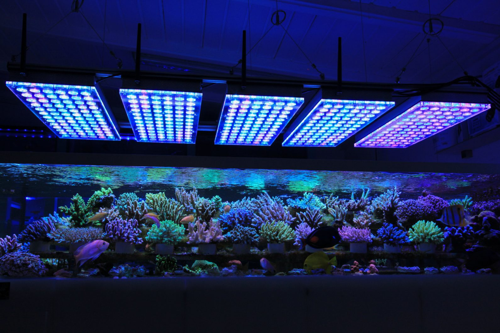 Éclairage LED pour aquarium récifal