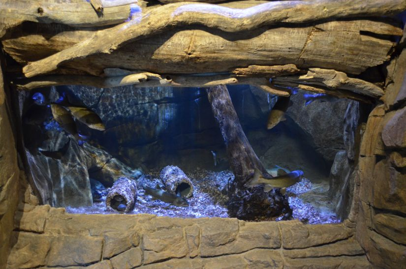 public freshwater tank lighting