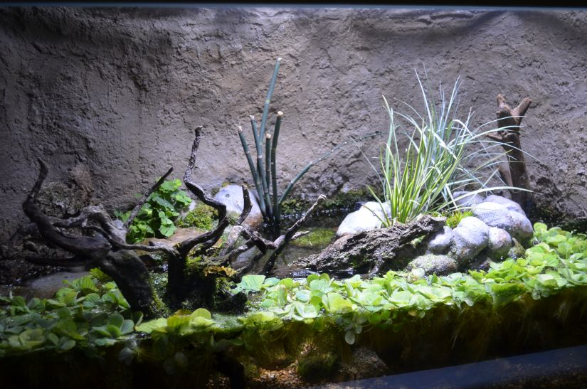 lighting for planted living tank