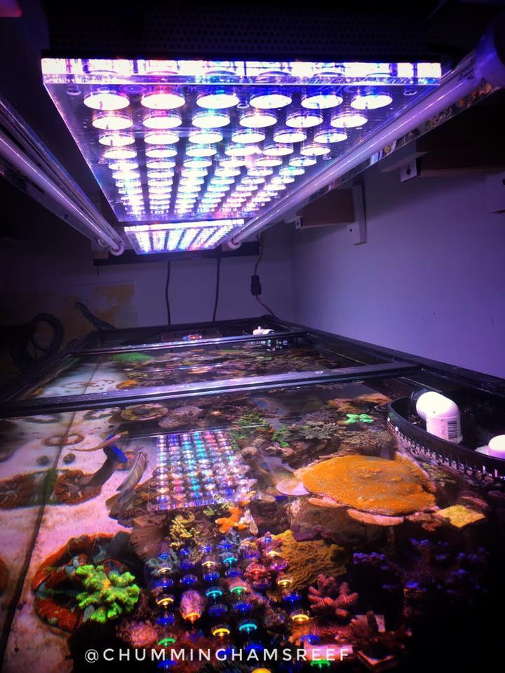 melhor luz do aquário de coral