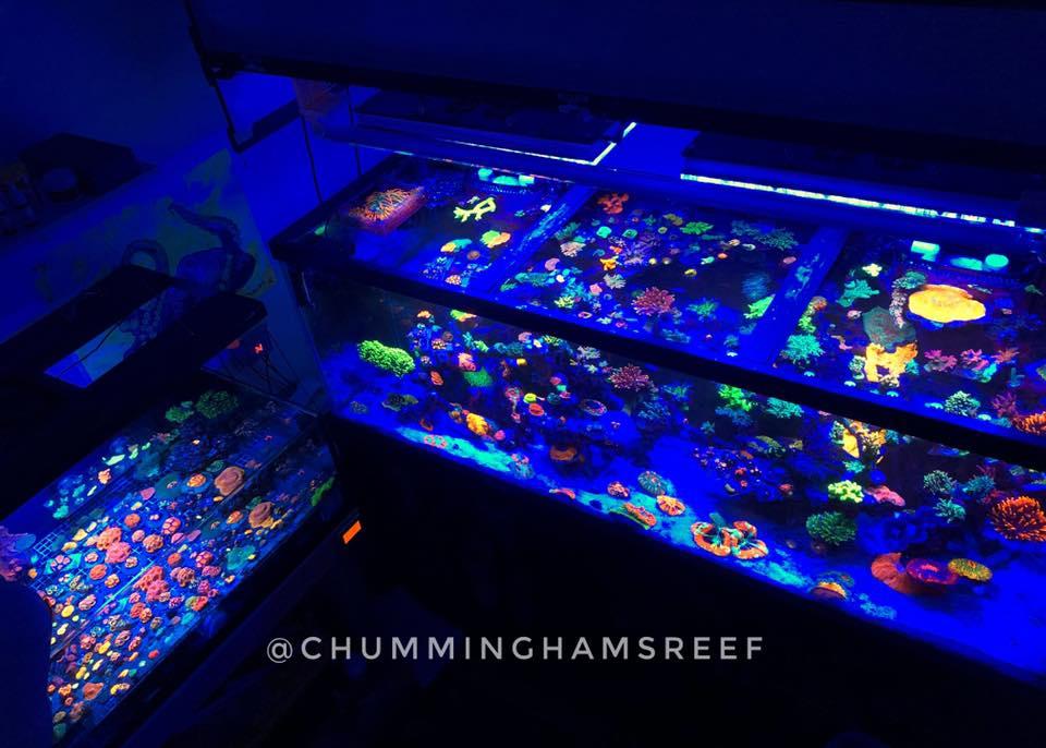 bela iluminação de crescimento coral