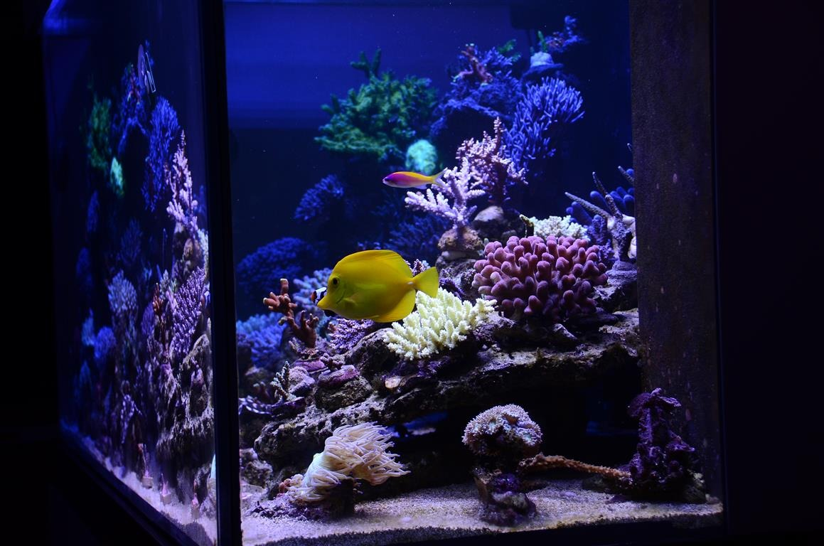 éclairage led aquarium sps lps