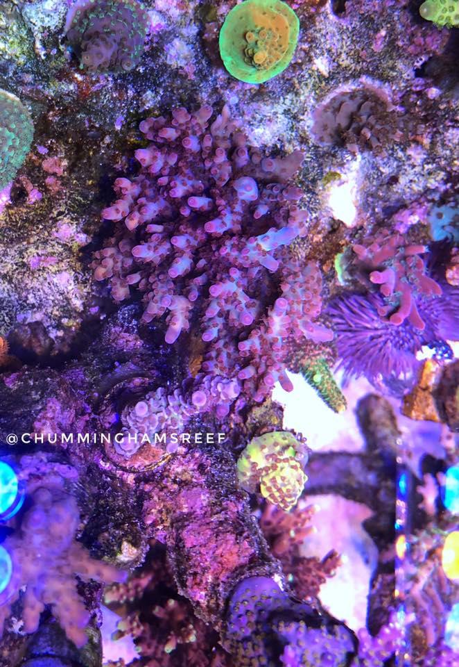 iluminação de aquário de crescimento de coral superior 2020