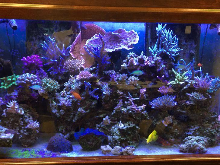 beautiful reef tank corals grew with atlantik v4