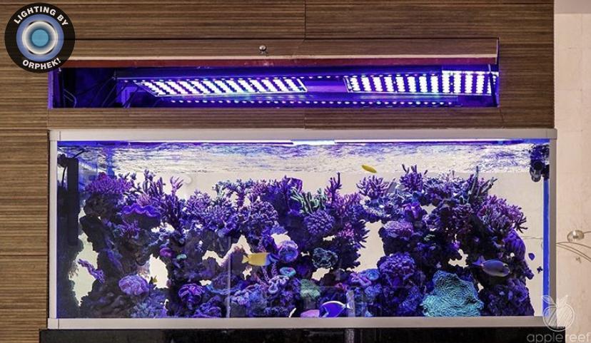 mejor coral pop luz led orphek