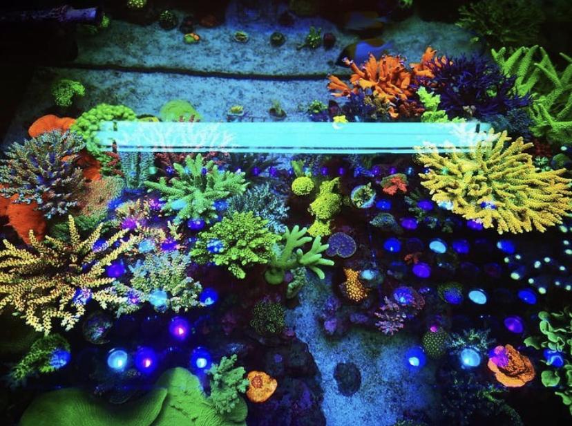 najlepsze koralowe akwarium doprowadziły światło 2020