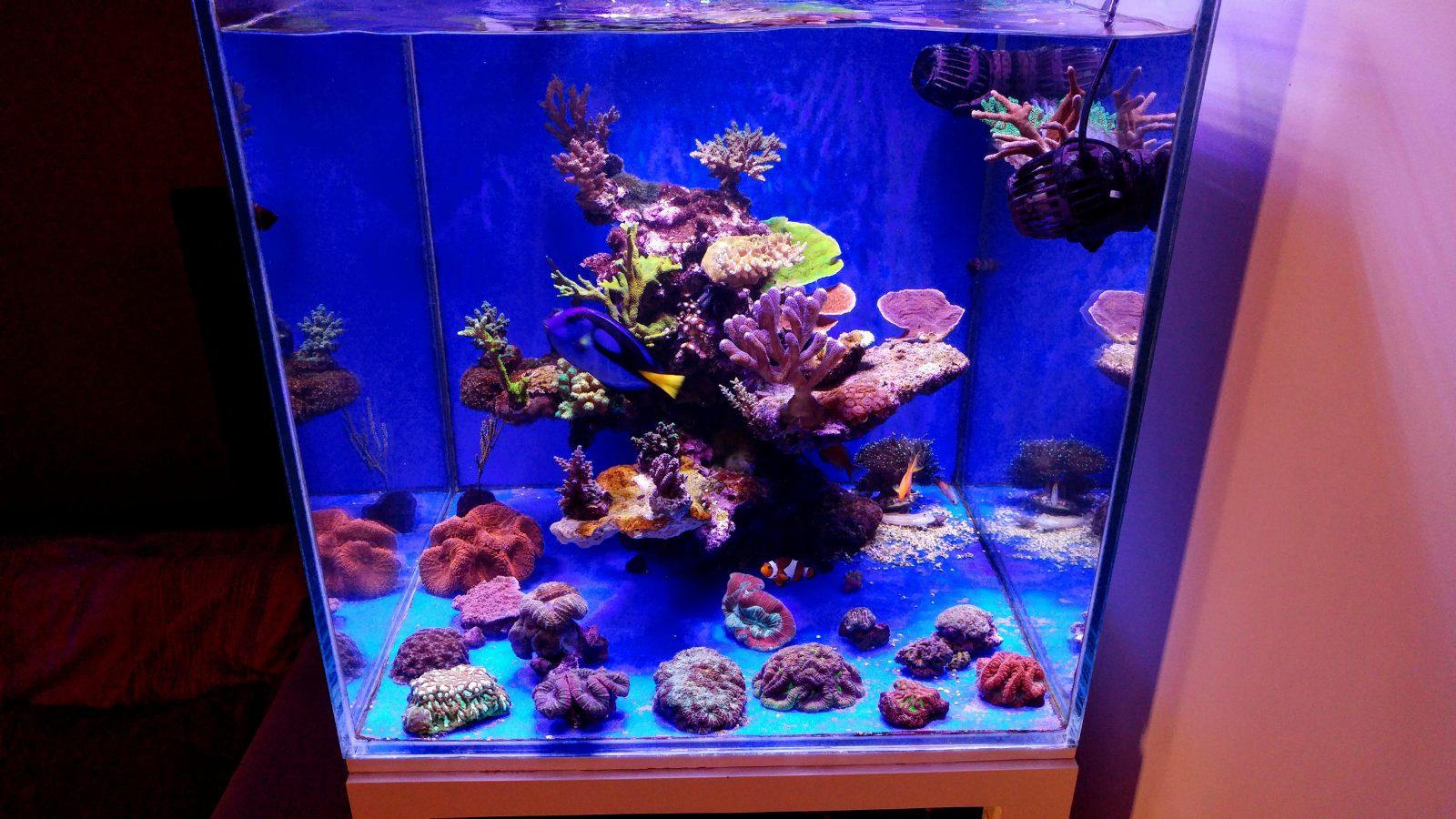 ύφαλος δεξαμενή κοραλλιών ποπ φώτα
