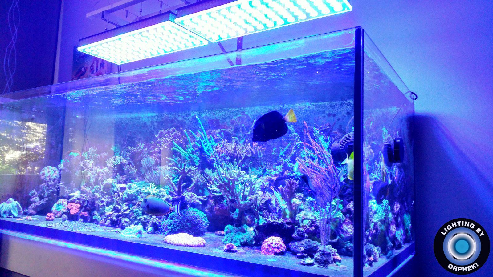 Orphek cahya akuarium LED