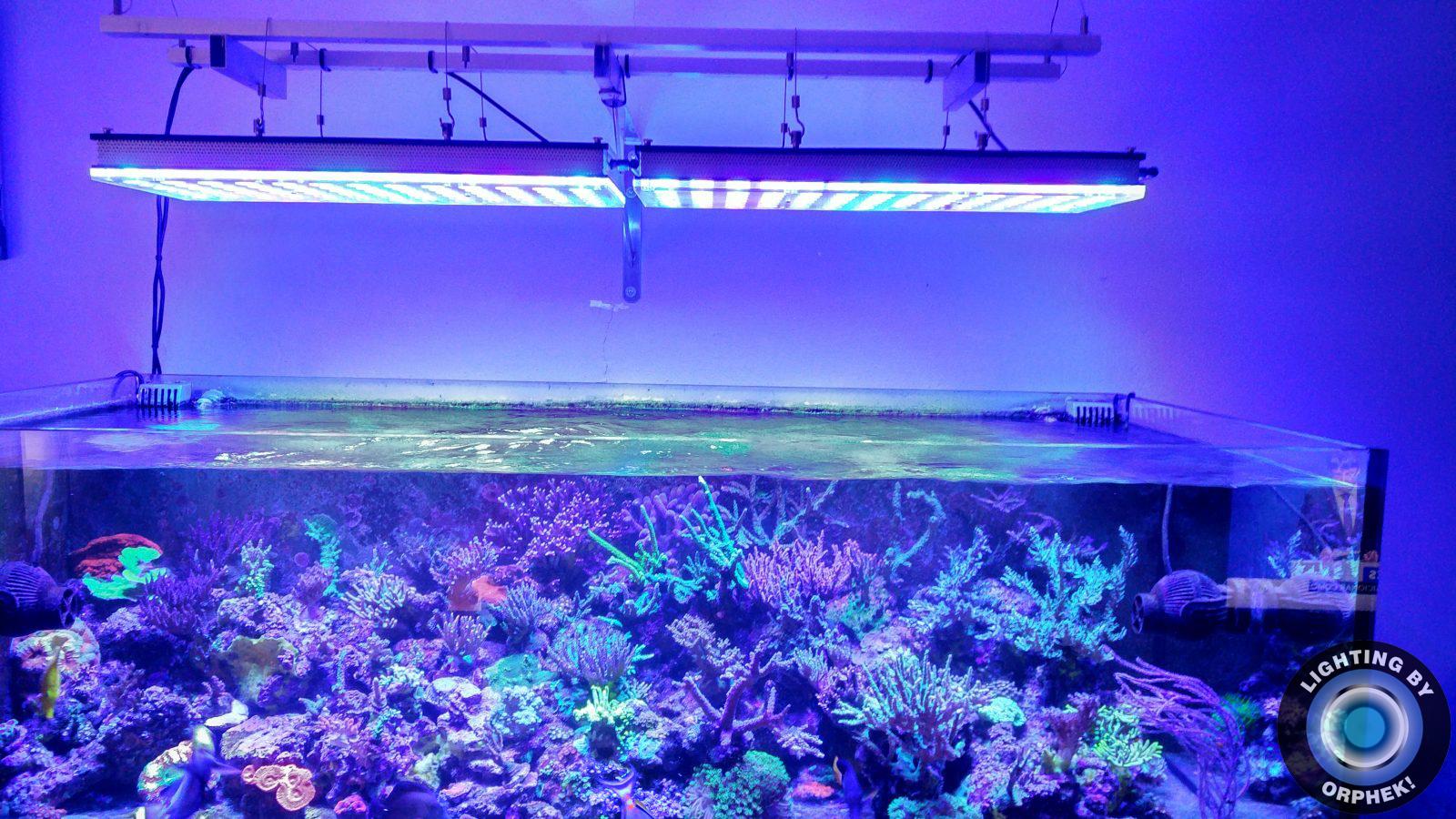 atlantik v4 mejor luz LED del tanque de arrecife 2020