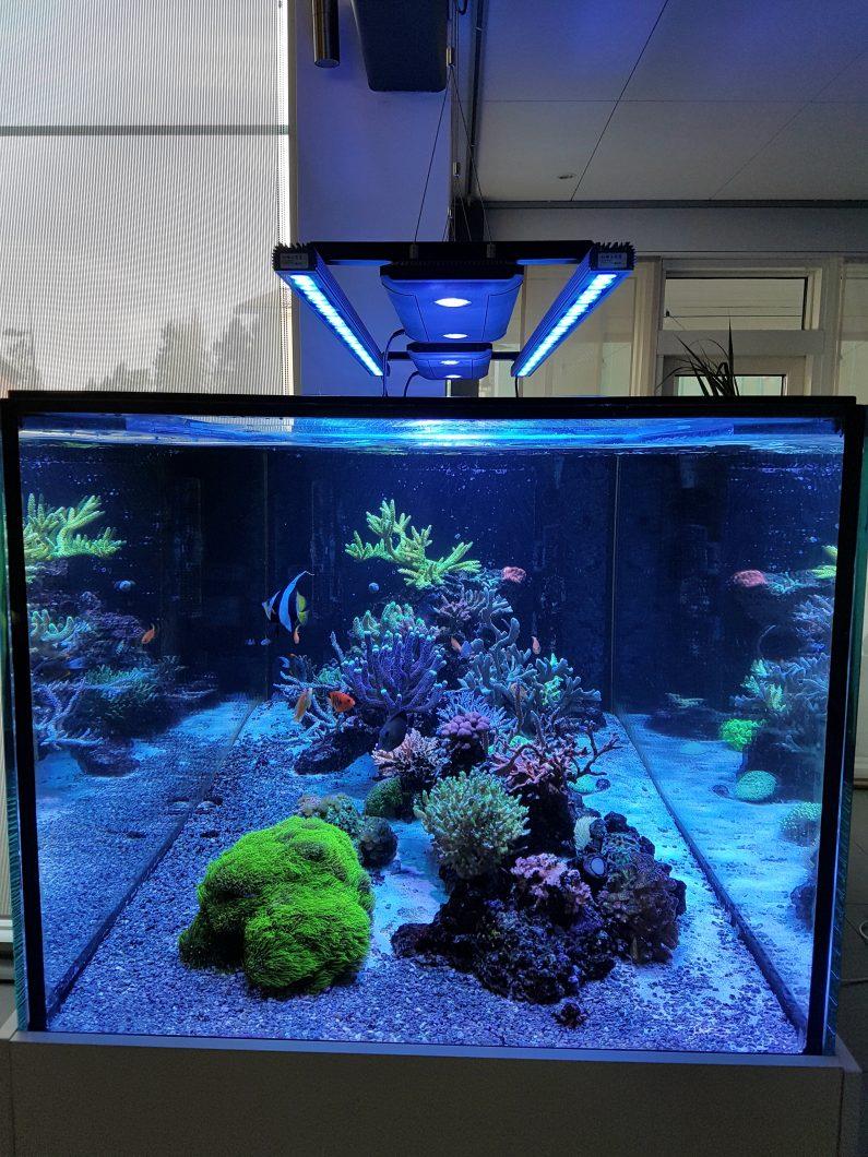 아름다운 탱크 최고의 LED 조명
