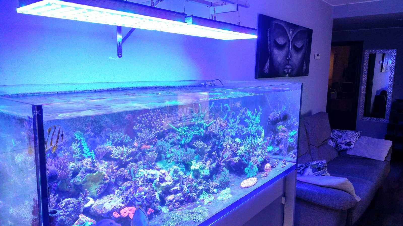 akuarium cahya laut karang orphek paling apik