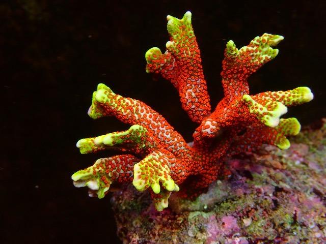 karang merah yang indah