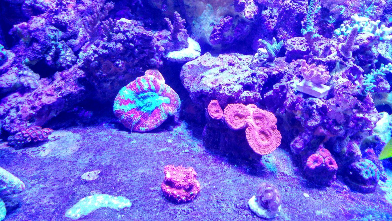 hermosa iluminación del tanque de crecimiento de coral