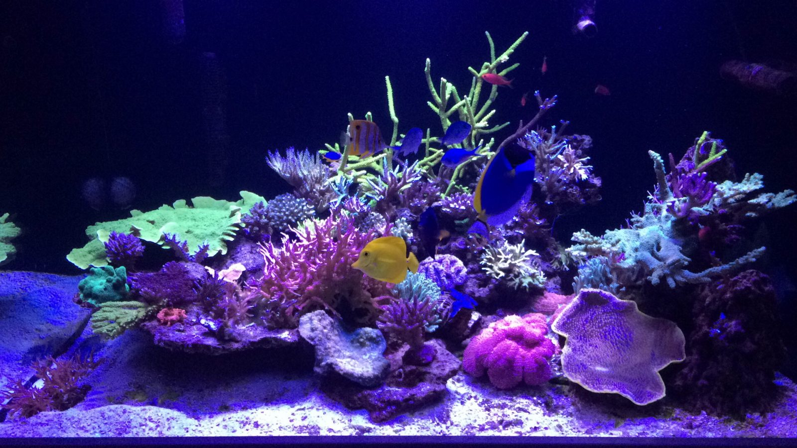 fantastisk koral pop bedste belysning