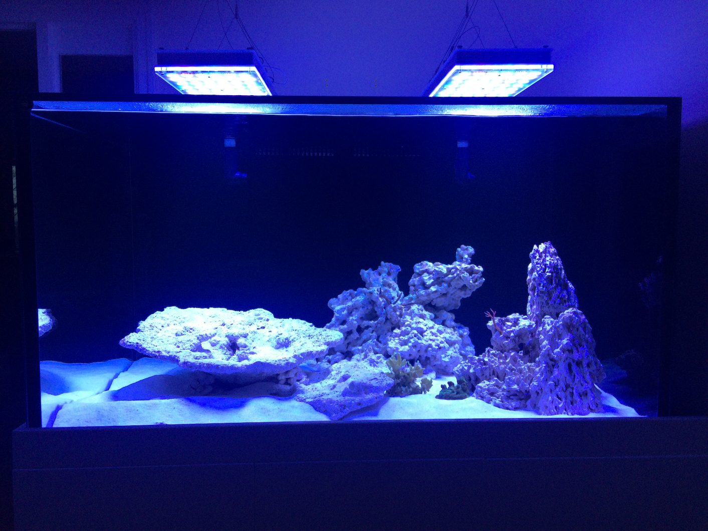 beste aquariumrif-LED's