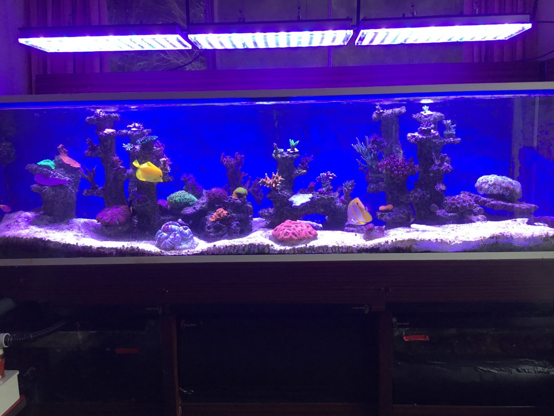 best public reef tank lights 2020