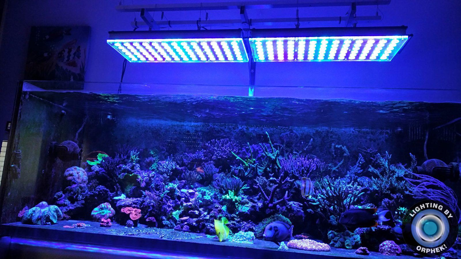lampu LED karang paling dhuwur 2020