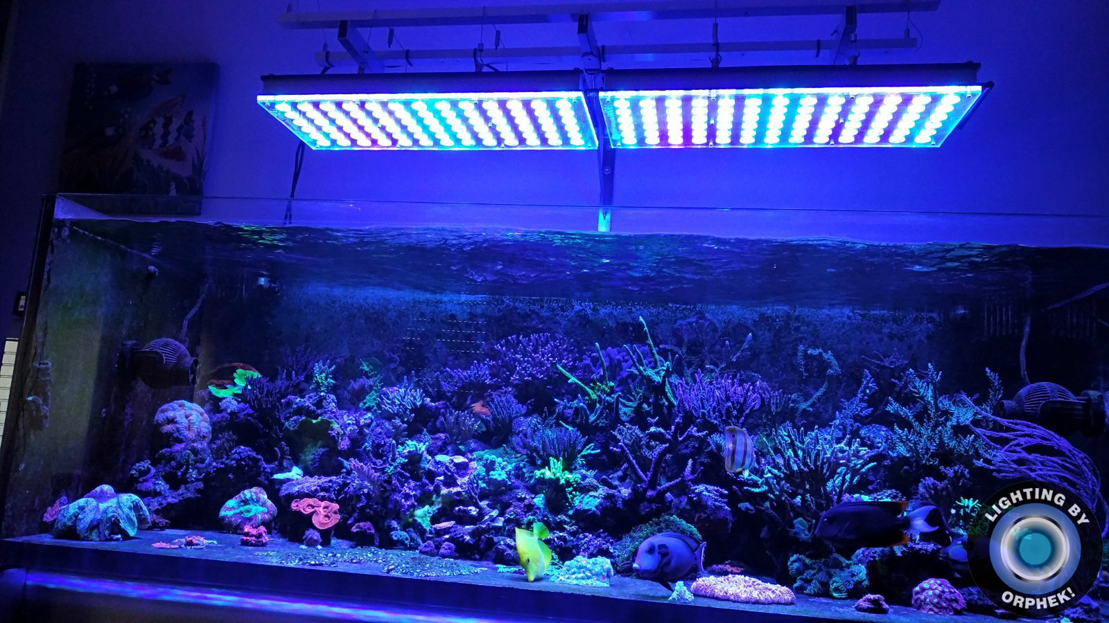 luces LED de arrecife superior 2020