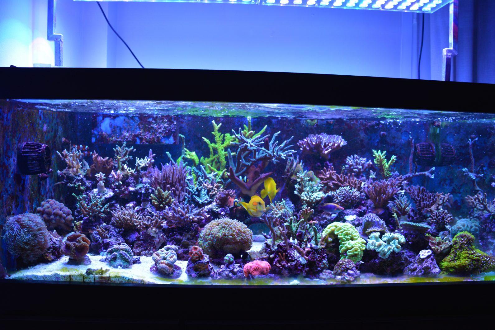 increíble tanque de arrecifes de iluminación LED orphek atlantik