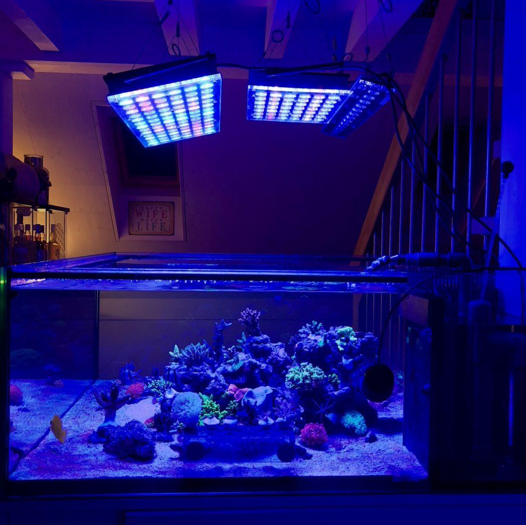 orphek atlantik mejor luz de crecimiento de coral