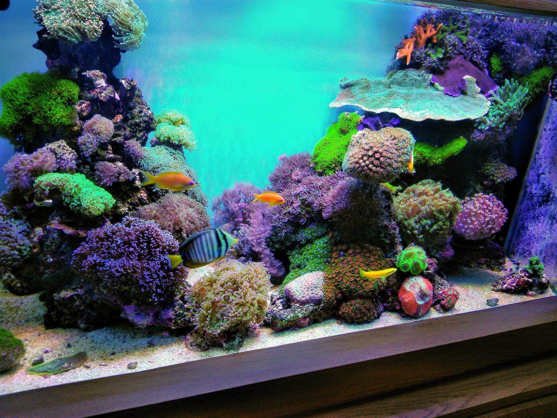 最好的珊瑚礁水族馆照明