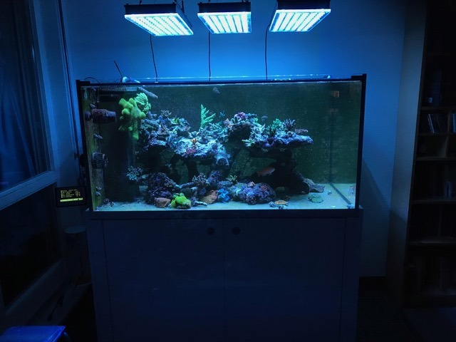 خزان الشعاب المرجانية تحت atlatnik v4