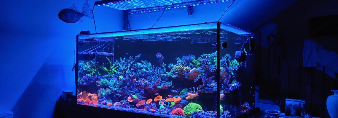OR3 ATLANTIK V4 GEN 2珊瑚礁鱼缸