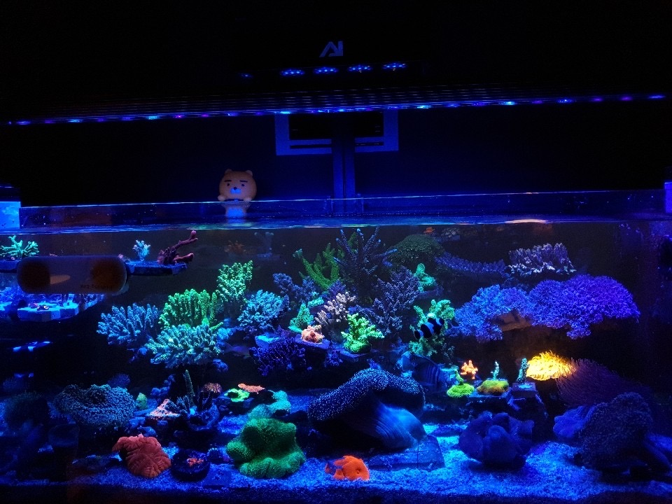 reef aquarium led lights or3