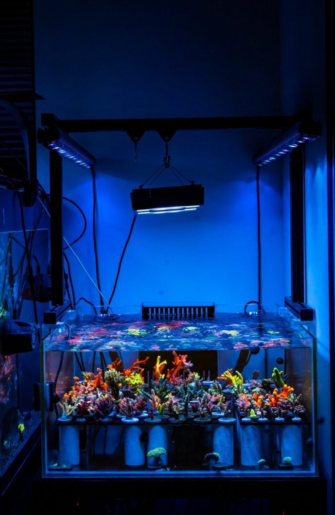 OR3 Blue plus rev akvarium LED-ljus Korallfärg