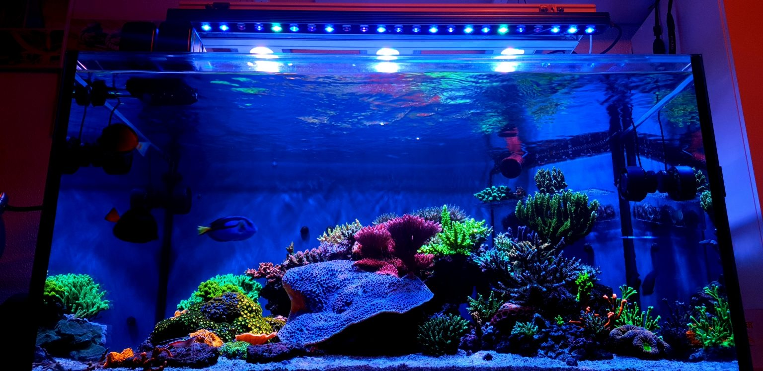 Orphek OR3 Blue plus reef aquarium LED light Coral color