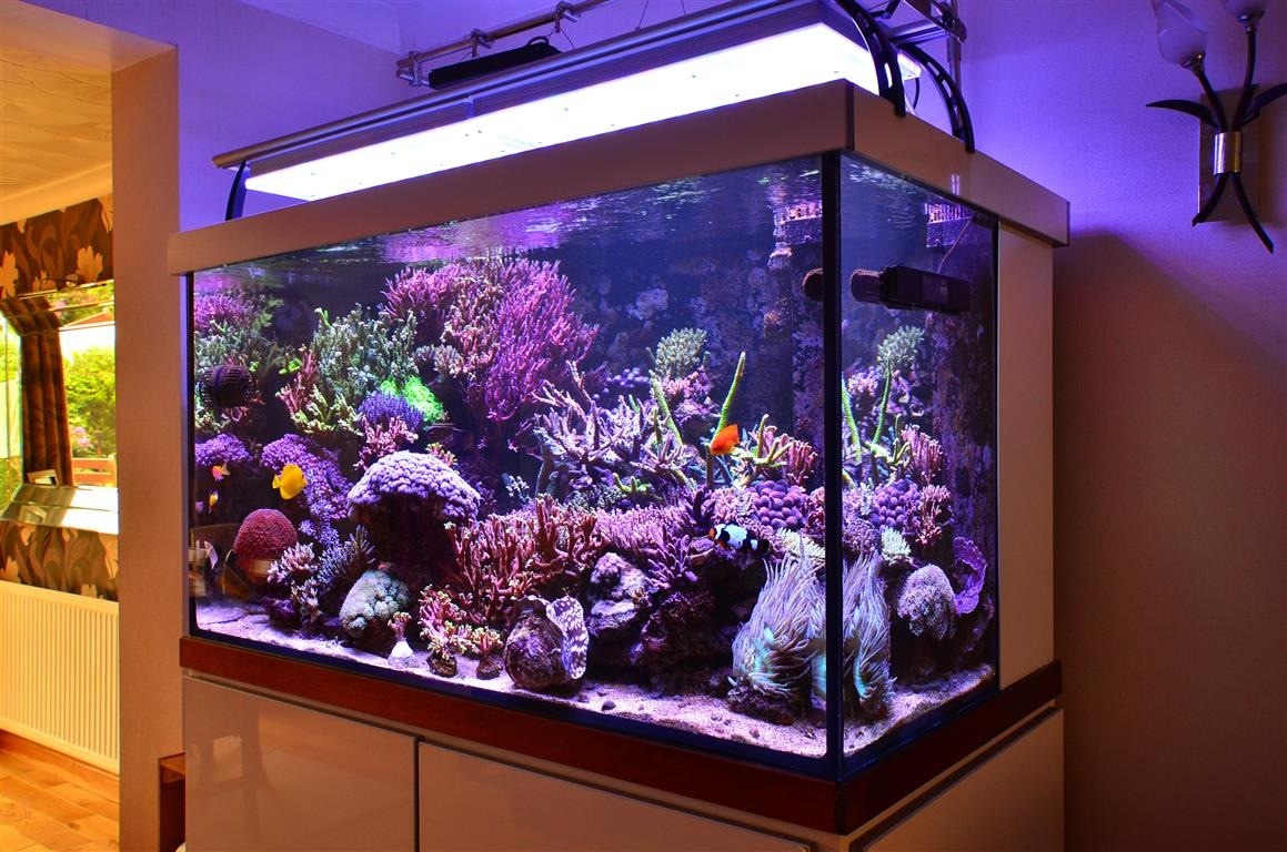 saltwater beautiful tank lights