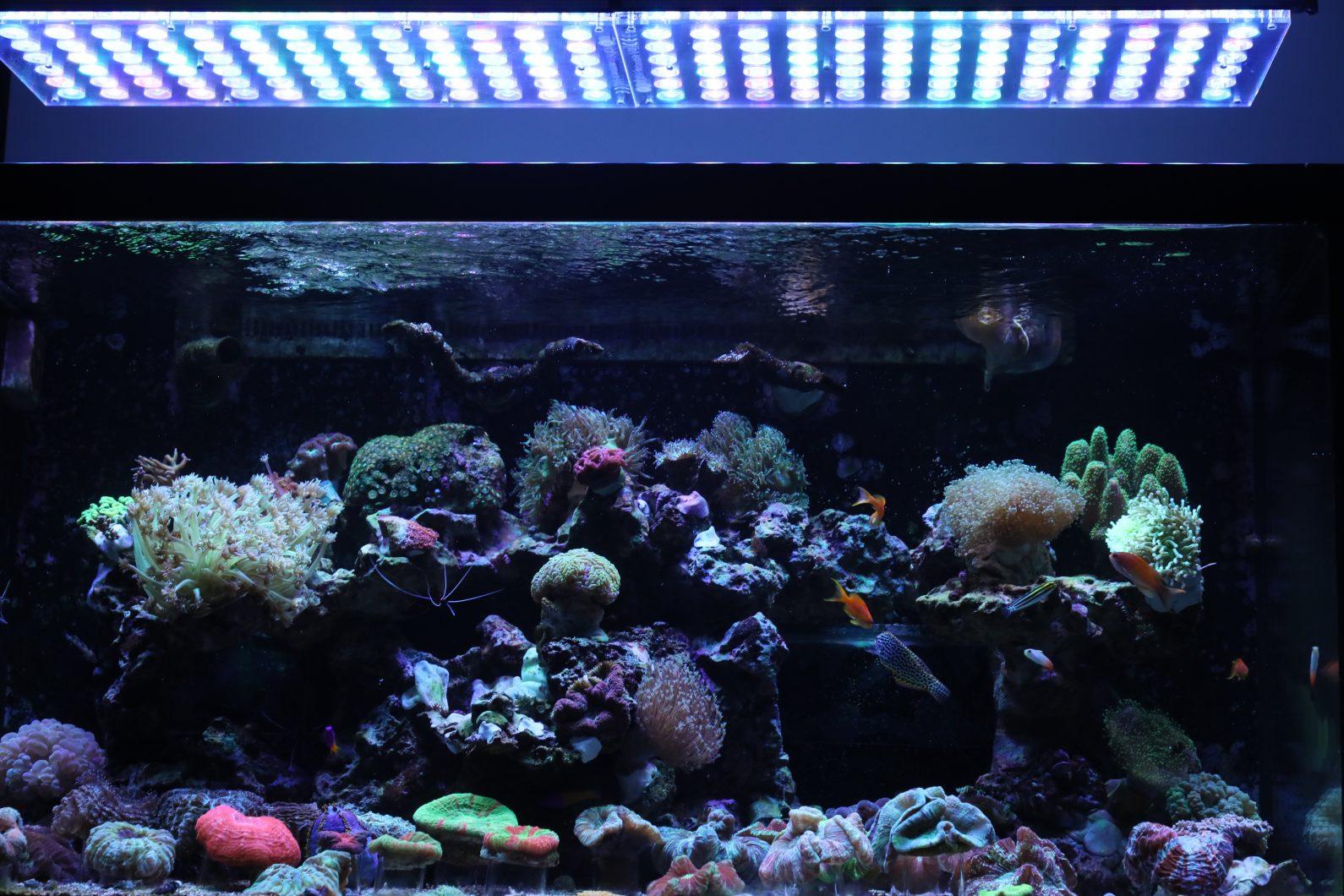 kolorowe akwarium koralowe ze słoną wodą