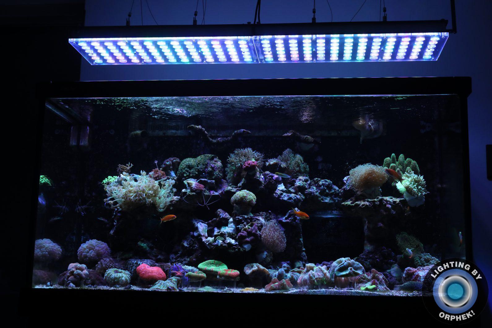 amazing tank led lights orphek atlantik