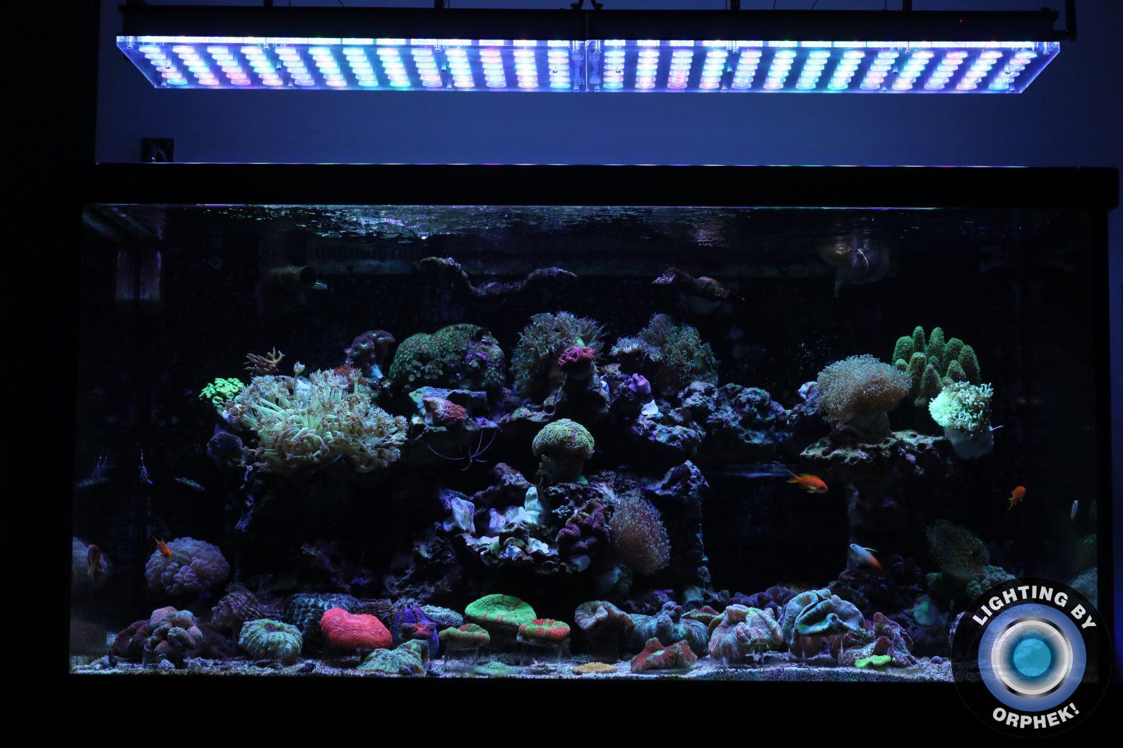 orphek najlepsza rafa LED 2020