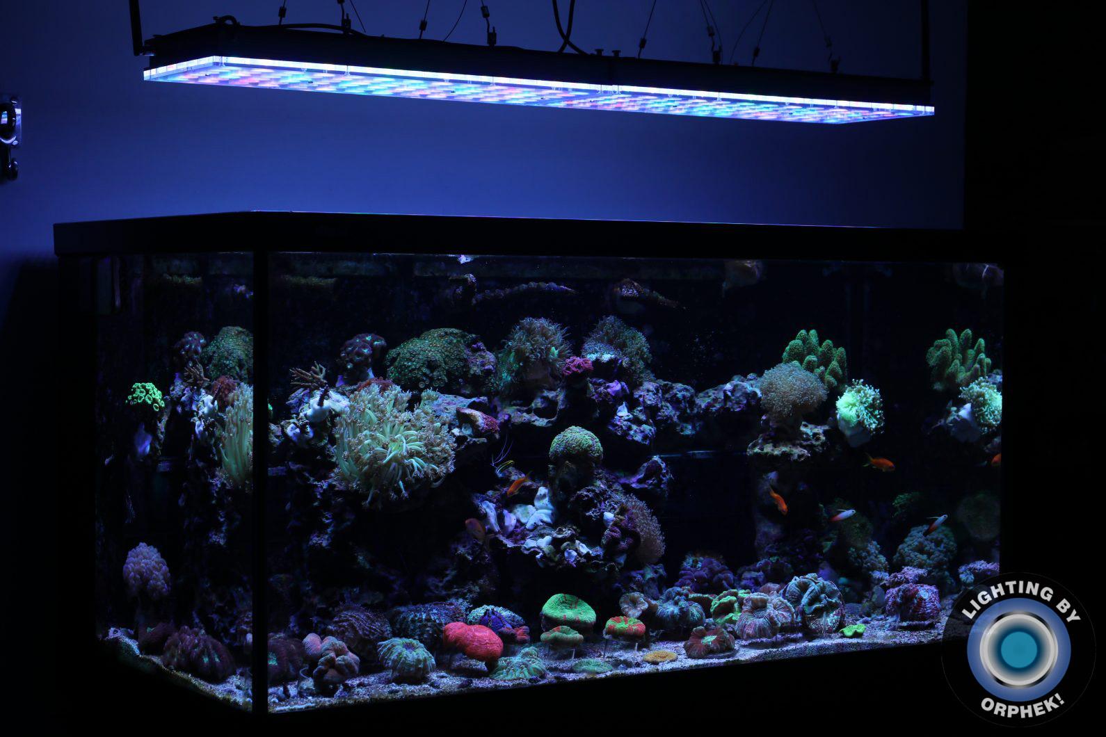piękne światła rafy akwariowej